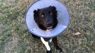 Dog_Disease